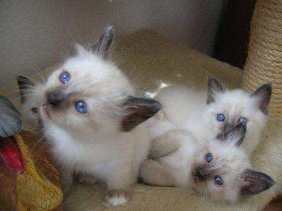 Populaire Bebe chaton a donner gratuit - Khenghua YW35