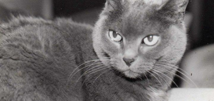 Noms de chats gris