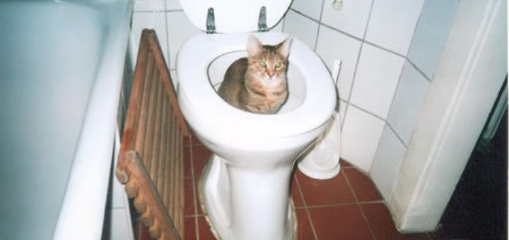 litiere chat wc