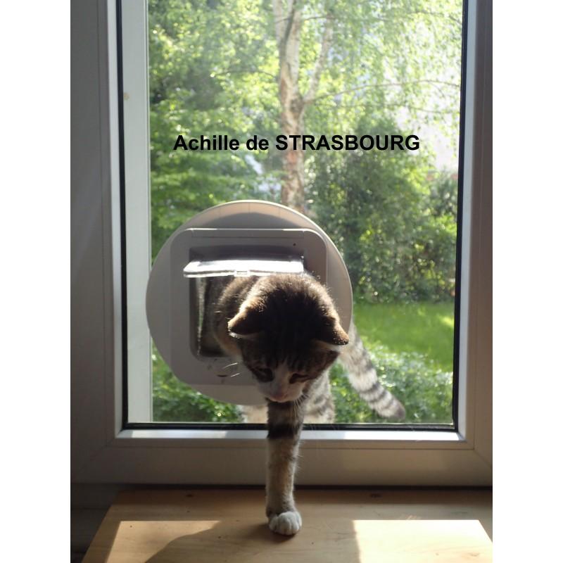 chati 232 re pour chat vitrage khenghua