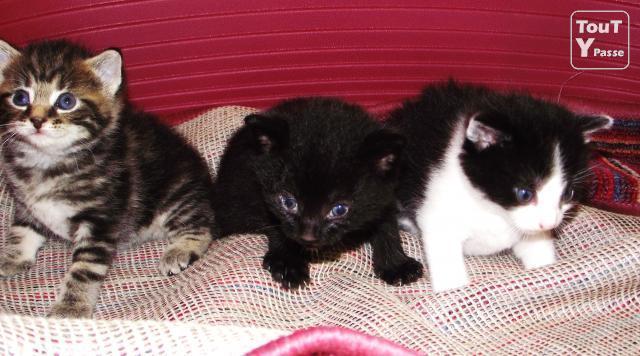 Adopter un chat de 2 mois