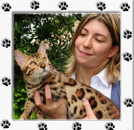 Chat lynx domestique prix khenghua - Chaton bengal gratuit ...