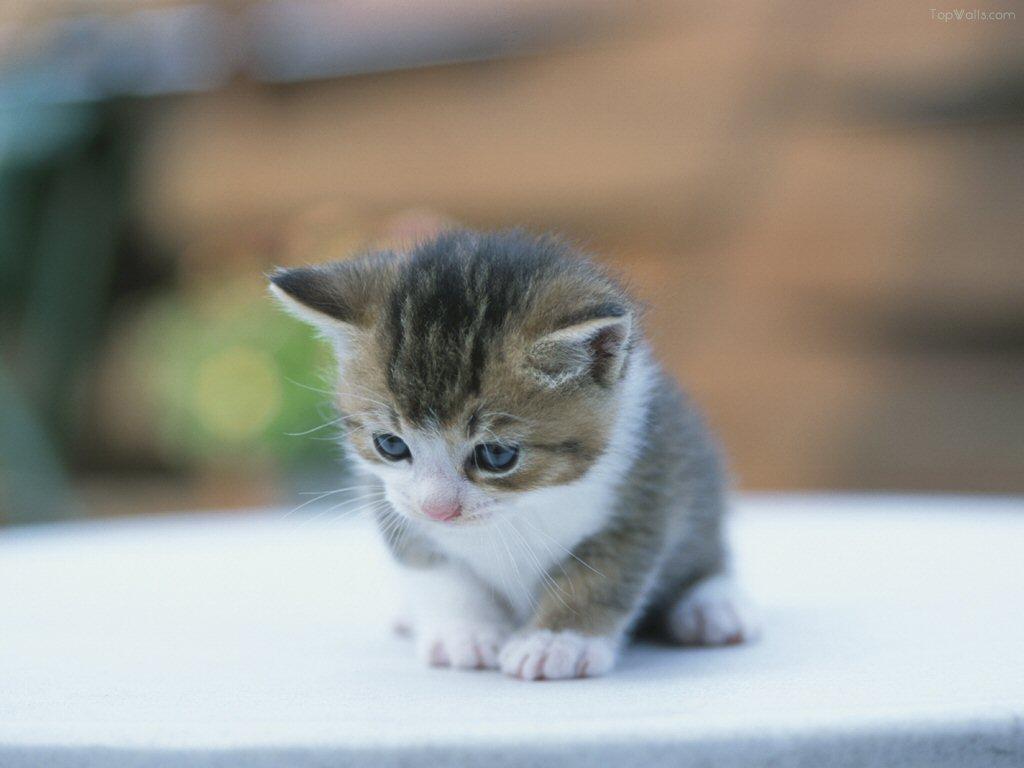 Bebe chat a adopter gratuit khenghua - Jeux gratuits de bebe chat ...