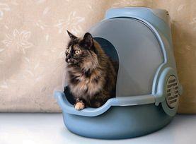 litiere chat sans odeur khenghua. Black Bedroom Furniture Sets. Home Design Ideas
