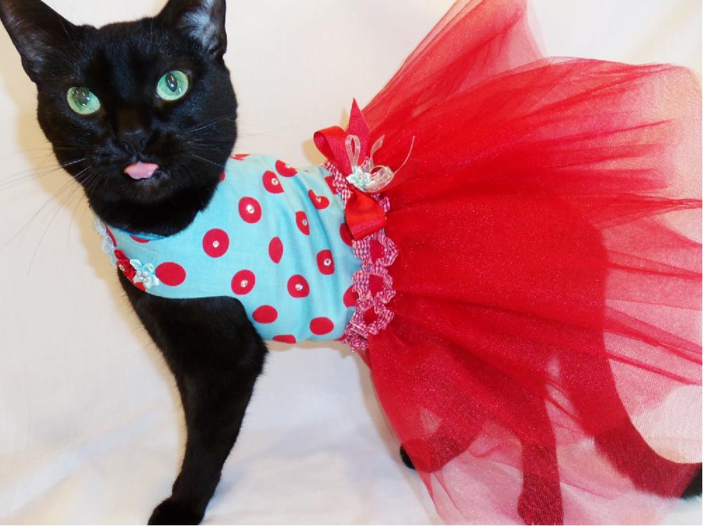 игры в кошачьем платье колени шалава взяла