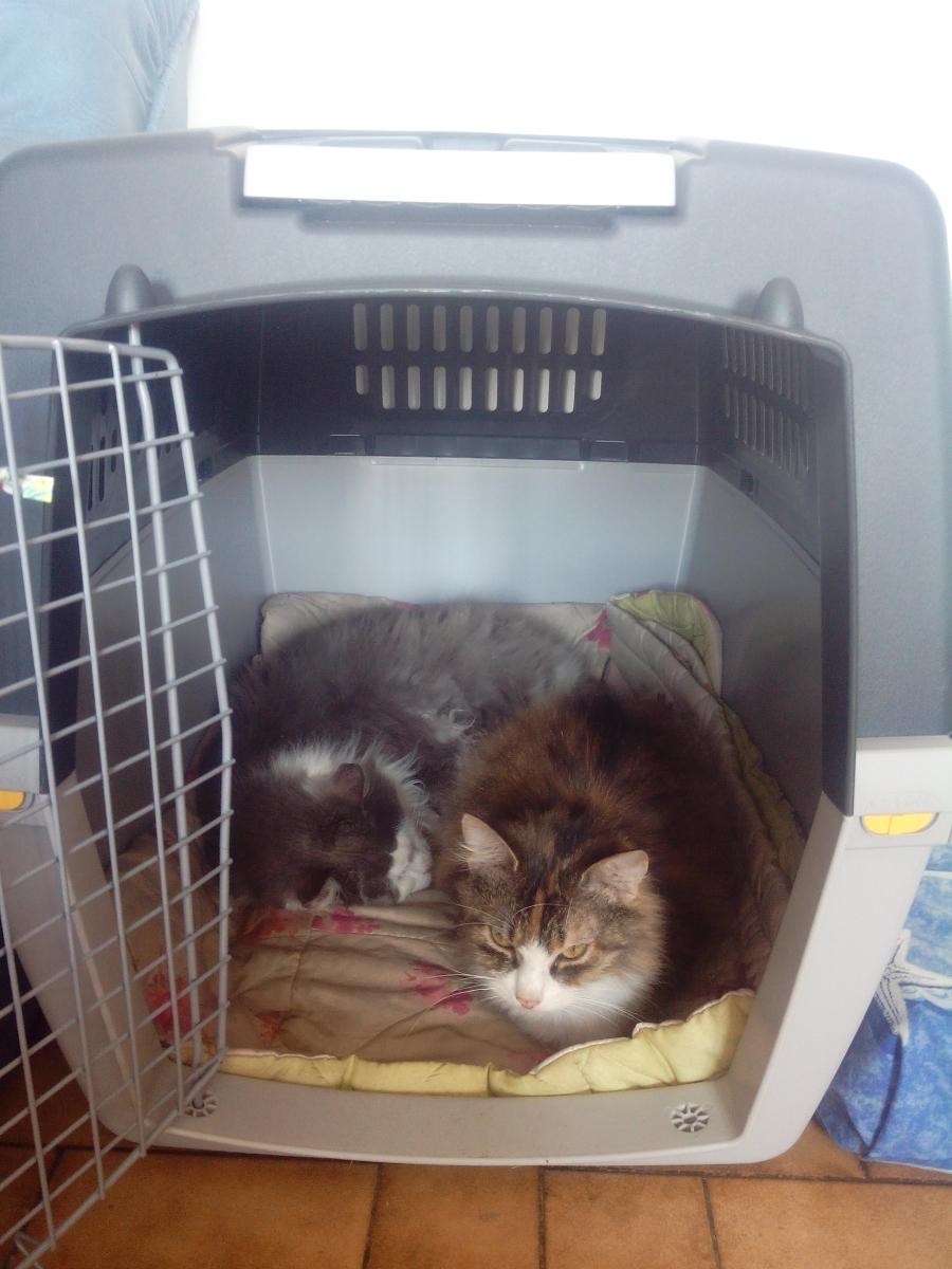 grande cage transport chien khenghua. Black Bedroom Furniture Sets. Home Design Ideas
